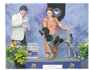 bluetick_coonhound_evenstarhounds_akc_pic-300x239